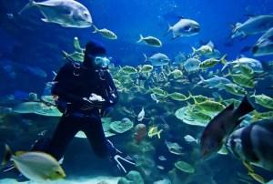 Is-Scuba-Diving-A-Sport