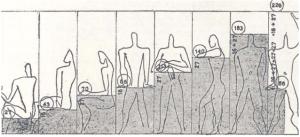 Diagram modulor berdasarkan perbedaan postur oleh Le Corbusier, 1954